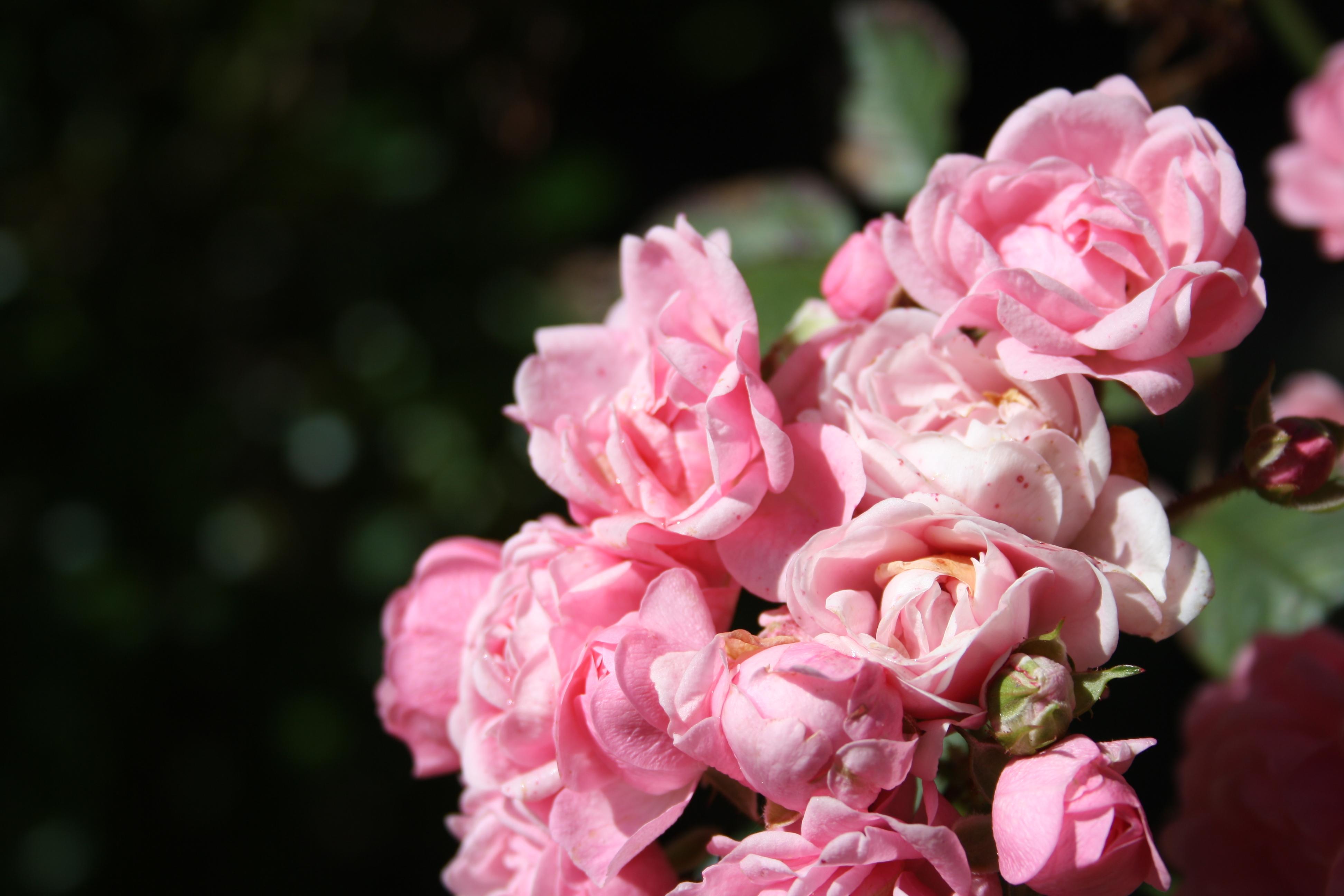 the fairy rose creeksidecottages 39 s blog. Black Bedroom Furniture Sets. Home Design Ideas